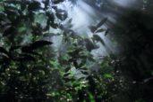 Norsk klimakutt skjuler storforbruk av palmeolje